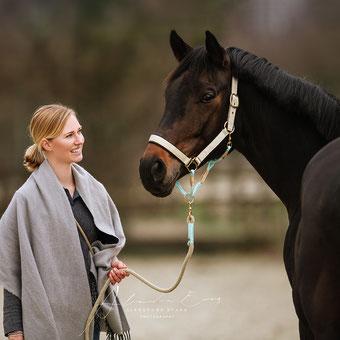 TAU STIL Halfter für Pferde und Ponys