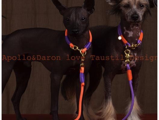 Frauchen von Apollo & Daron aus der Schweiz (www.tierfotografin.ch)